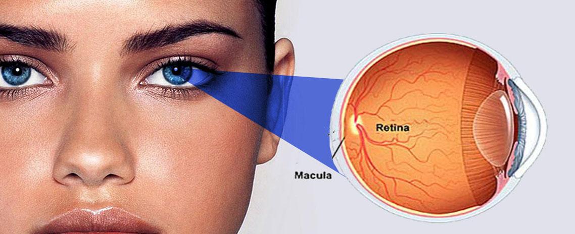 Detalhe da retina que fica no fundo olho